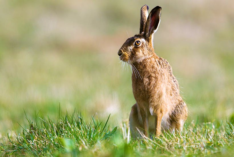 Hare coursing gangs are terrorising the countryside
