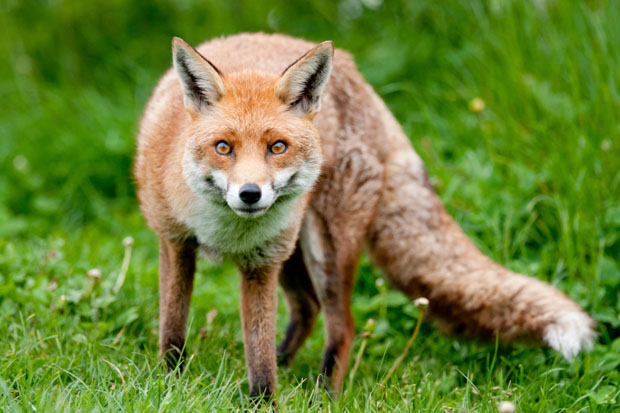Ten years after the ban, why are there still hunt saboteurs?