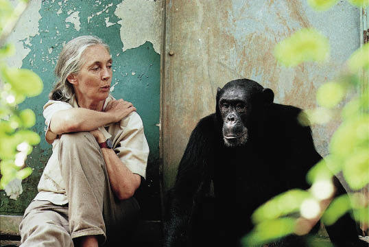 'If we have souls, then  so do chimps'