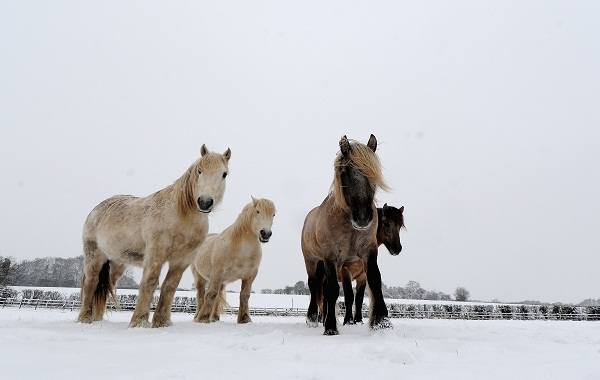 These ponies might look healthy, but they're not necessarily edible. Image: Getty