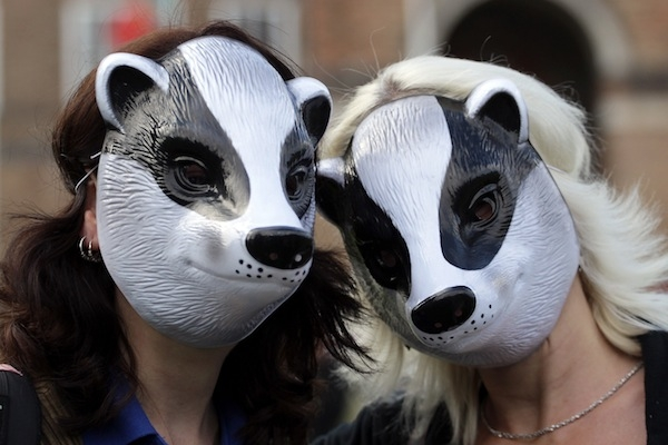 Protesters wear badger masks at a rally in Bristol against the proposed cull. Picture: Getty