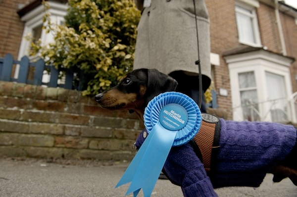 Greg Barker's dog on the campaign trail. The Tories need more footsoldiers for future campaigns, canine or otherwise. Picture: Getty