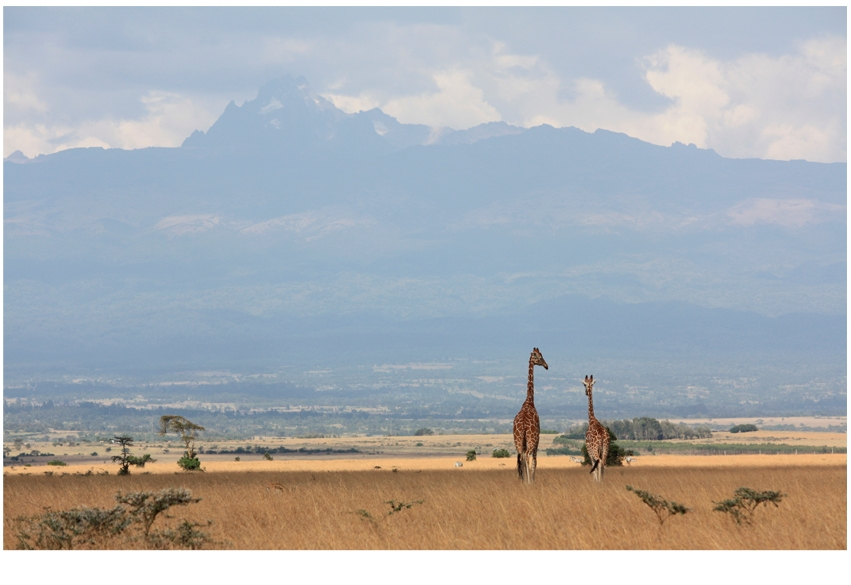 Travel Extra: Safari - The ride of a lifetime