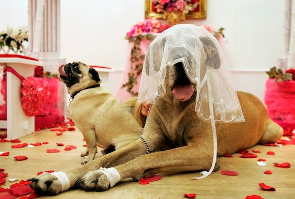 Selfridges Hosts Pet Blessings in Their Little White Wedding Chapel