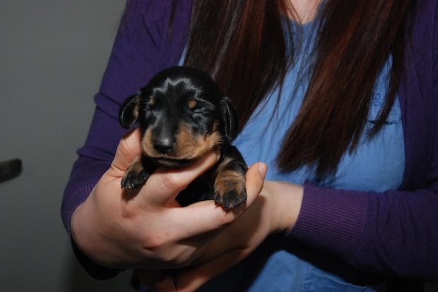 Britain's first cloned puppy. Image: Channel 4