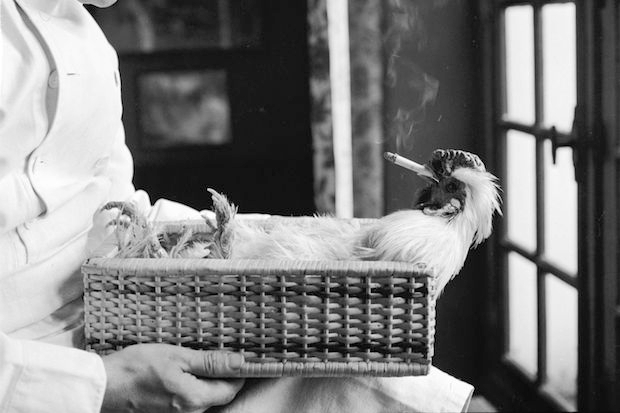 A chicken smokes its final cigarette. Image: Getty