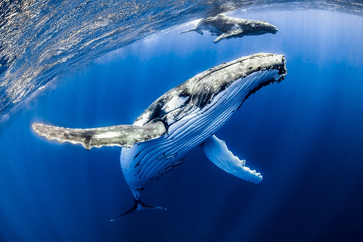 Why whales sing: it's a question of culture