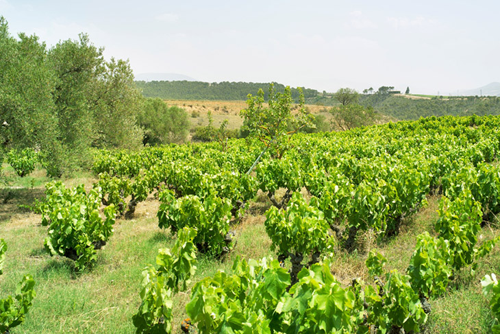 Winemaker's Lunch with Bodegas Artadi – Friday 27 September