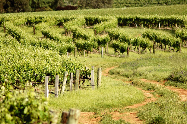The Clare Valley