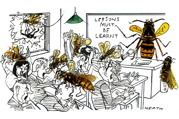 What wasps do for us