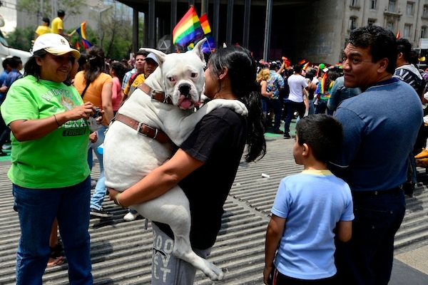 Can animals really be gay?