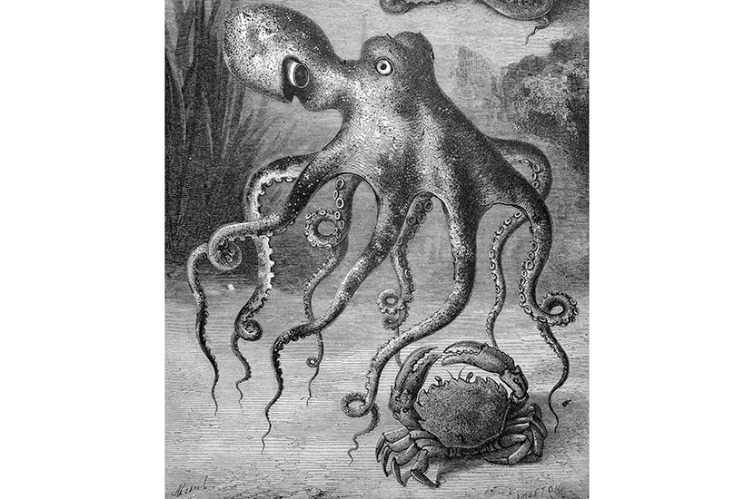 The ethics of eating octopus