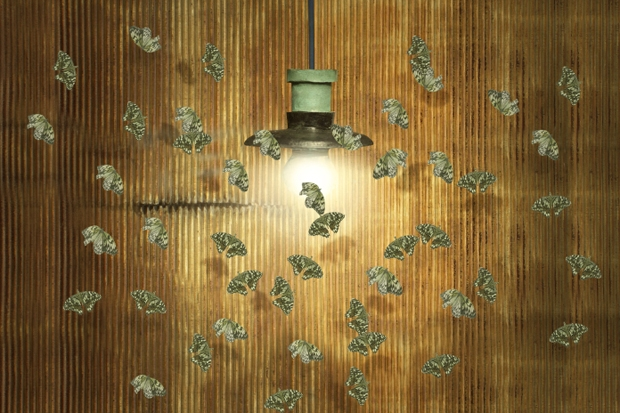 The moths are coming!