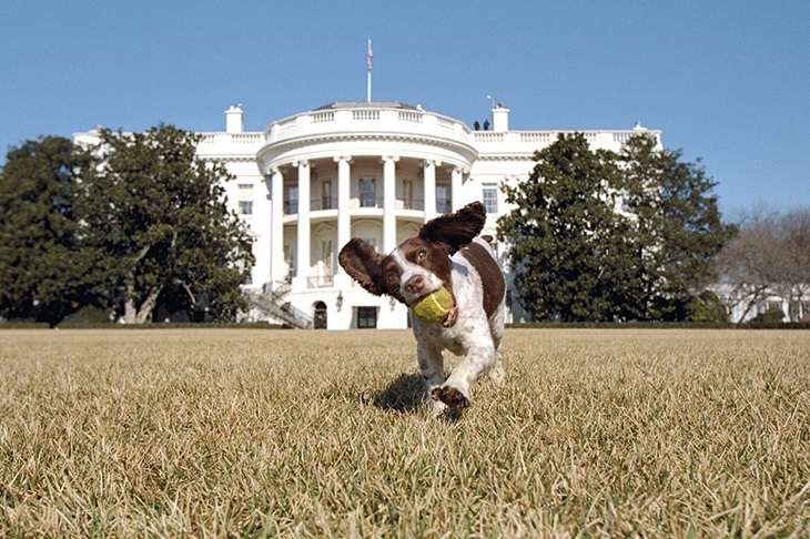 The political power of America's First Dogs