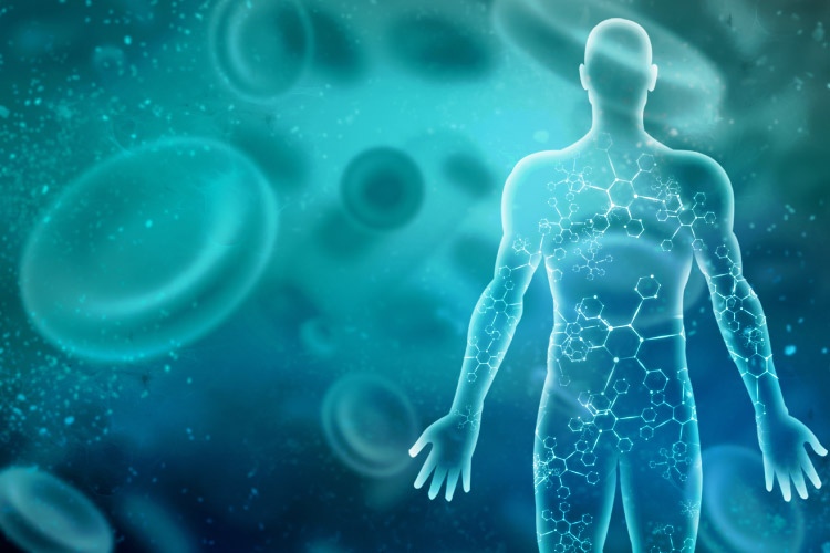 The immune system is a network of cells, tissues and organs