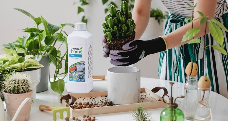 750x400_Bleach_and_the_Many_Ways_it_Works_at_Home_Gardening.jpg