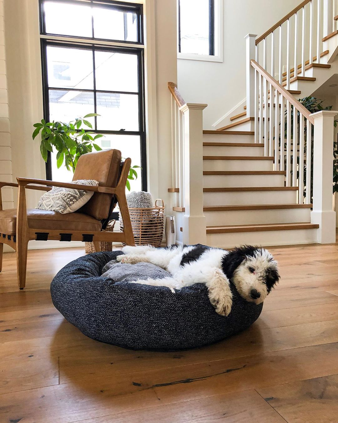 dog lounging in a dog bed in farmhouse living room with black double-hung window behind