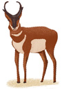 An illustration of a pronghorn.