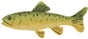 An illustration of a trout.