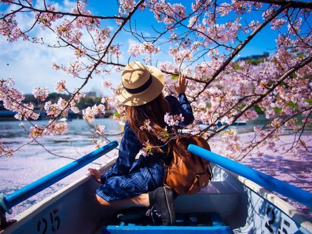 Japan_iStock-942550846.jpg